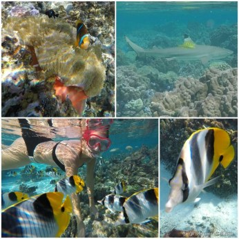 excursion snorkeling Tahaa - Polynésie française