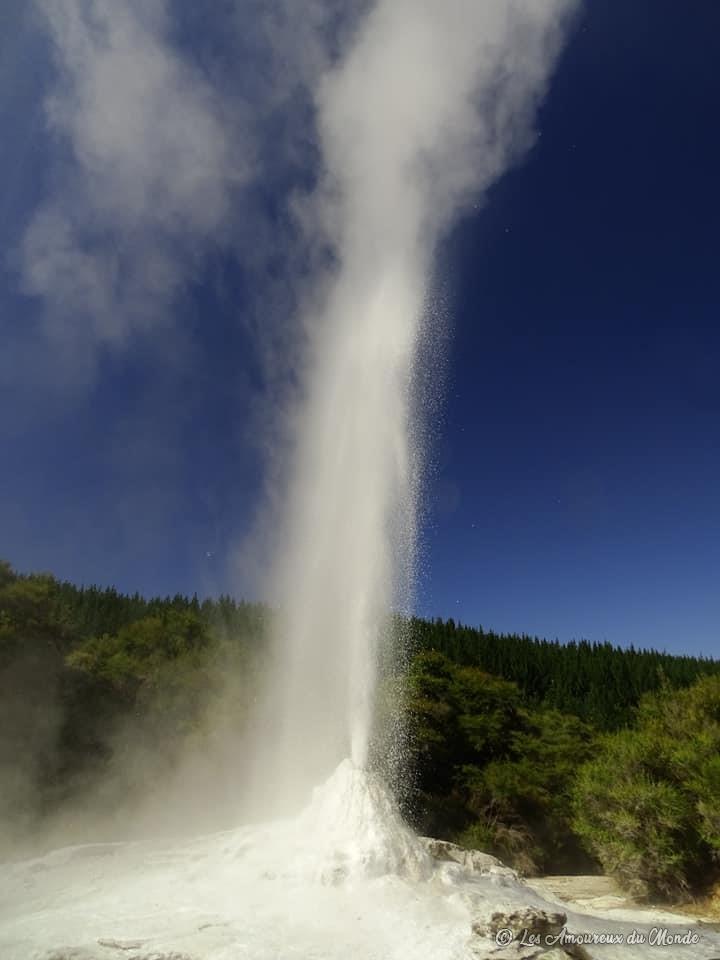 """geyser """"Lady Knox"""" dans le parc Wai-O-Tapu à Rotorua en Nouvelle-Zélande"""