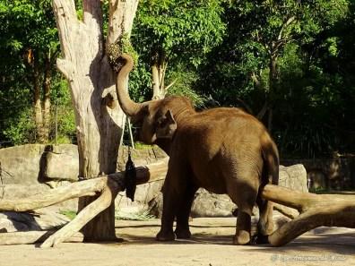 Zoo Auckland - Nouvelle-Zélande