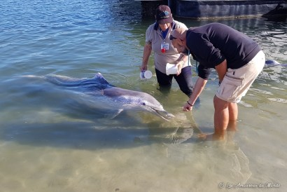 Nourrir les dauphins ç Tin Can Bay - Australie