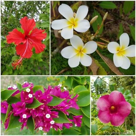 l'île de Lifou en Nouvelle-Calédonie