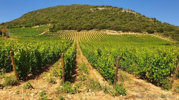 Patrimonio - Route des vins - Cap Corse