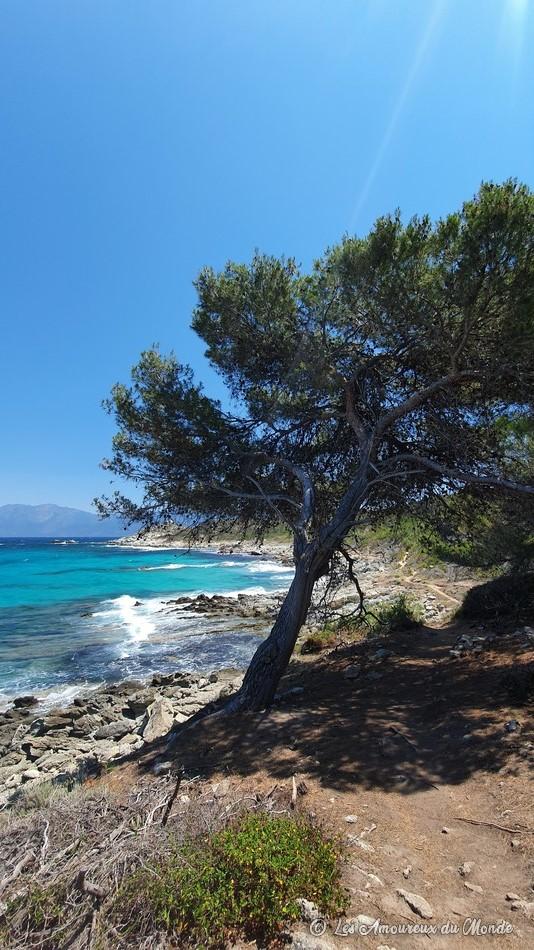 Chemin côtier entre la plage de Saleccia et la plage du Lotu - Désert des Agriates - Corse