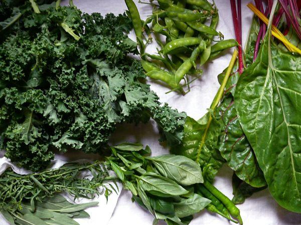 herbs, kale, peas, chard, chilies