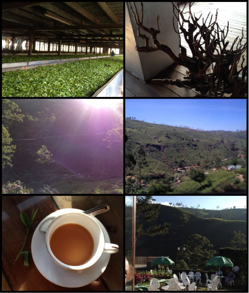 tea county