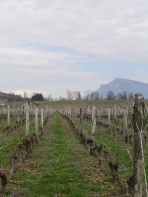 vigne chignin