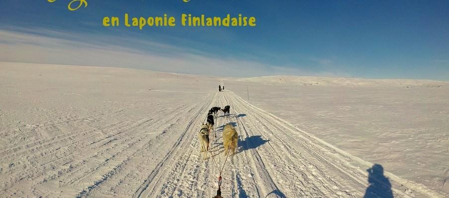 5 jours de chien de traineau en laponie finlandaise
