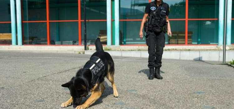 Formation –  Le chien qui détecte les cadavres