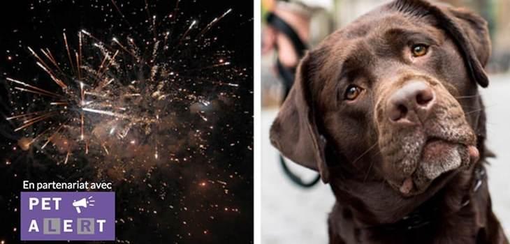 6 astuces simples pour calmer votre chien pendant les feux d'artifice