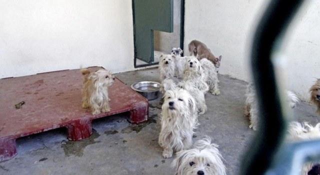 Le couple de retraités aux 78 chiens condamné