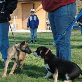 En Valais, les nouveaux détenteurs de chiens devront suivre un cours