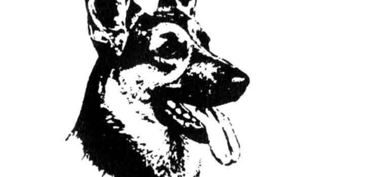 Club suisse du berger allemand BA – Règlement de sélection, d'élevage et d'exposition