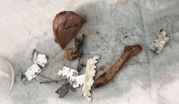3 chiens tués par des cervelas piégés