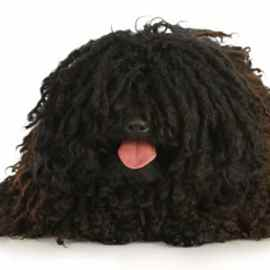 Comment rafraîchir son chien quand il fait très chaud ?