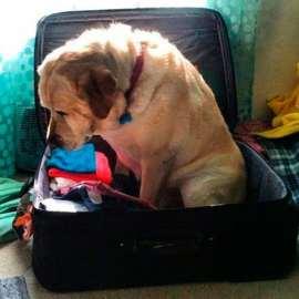 Votre hôtel accepte les chiens ?