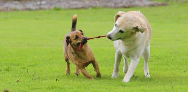 La mort d'un chien attise la peur de l'empoisonnement