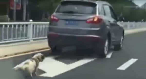 Il traîne son chien derrière son 4×4