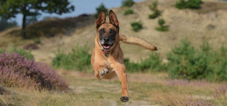 Un chasseur croit tirer sur un loup, mais tue le chien d'un couple de vacanciers