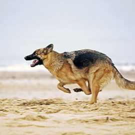Plages autorisées aux chiens en suisse romande