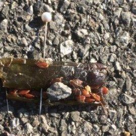 Saint-Prex: des saucisses suspectes retrouvées au bord du lac