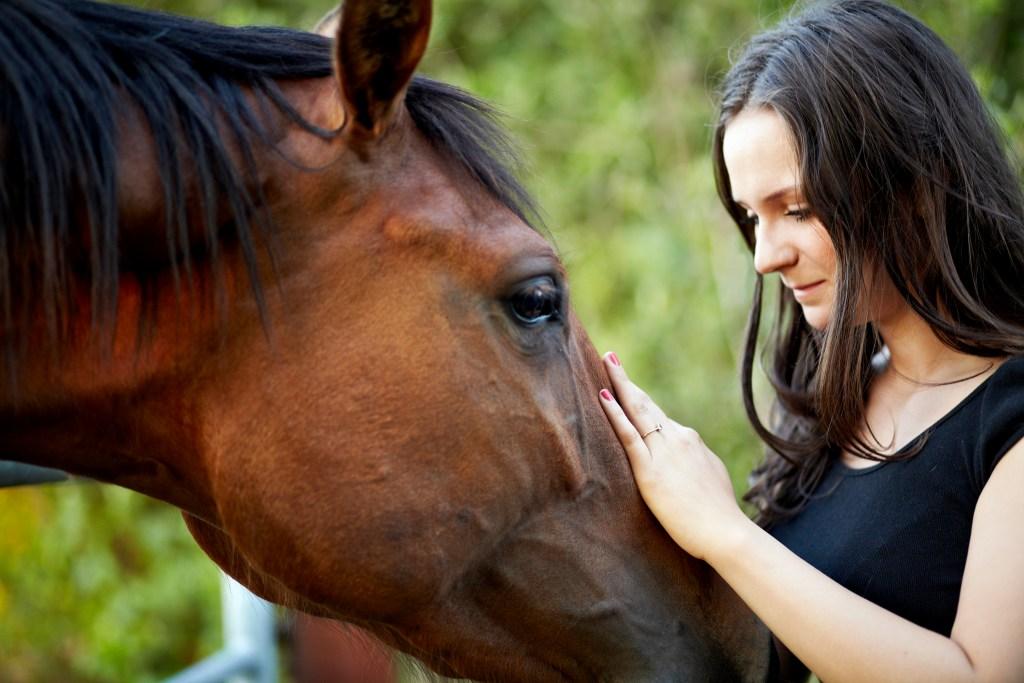 Offre expérientielle avec les chevaux