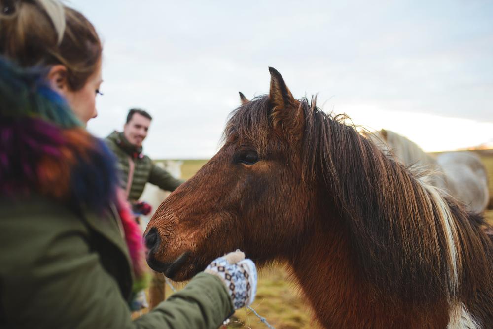 Pour les parents expérience de coaching facilité par le cheval