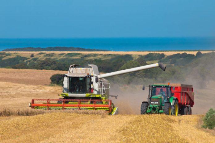 On récolte le blé dur : BON RENDEMENT ? – «La minute de François»