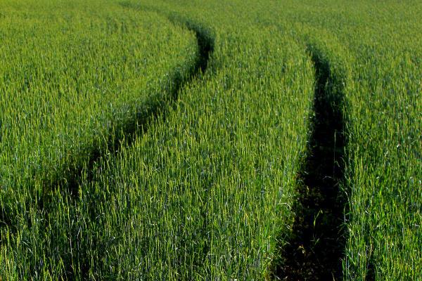 La Confédération paysanne estime qu'un changement d'orientation agricole reste nécessaire