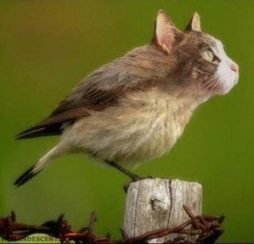 Oiseaux - le chat est un prédateur.