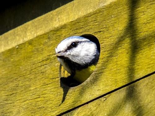 Oiseaux - entrée nichoir