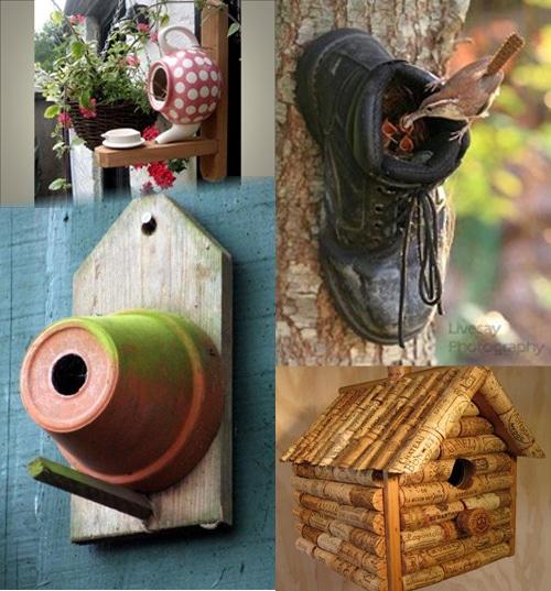 Oiseaux - Créativité dans les niches