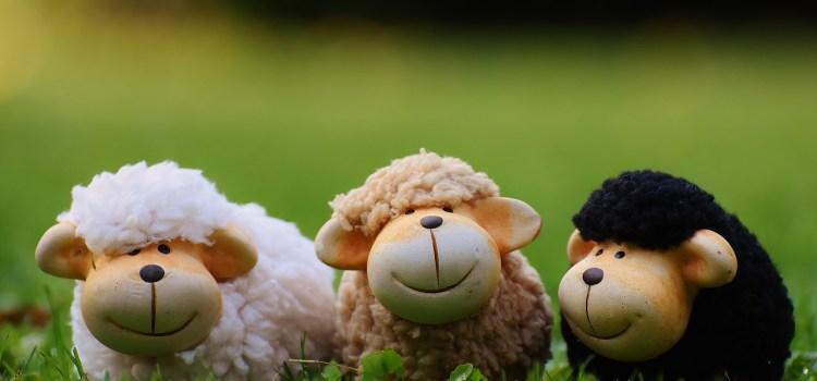 Moutons ou consom'acteurs – Choisissez votre camp