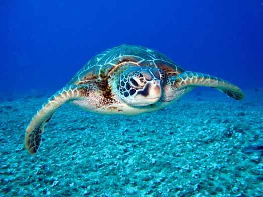 I 13 migliori oggetti portafortuna tartaruga