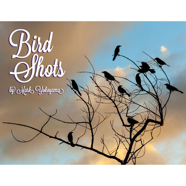Bird-Shots-home-square