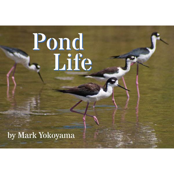 pond-life-cover-home-square