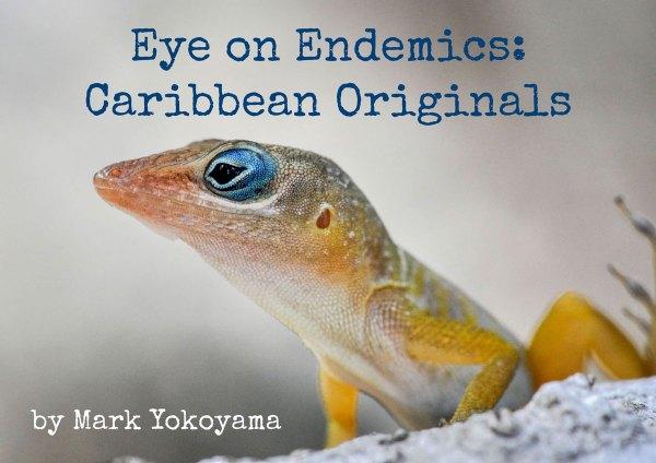 Eye-on-Endemics