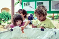 migratorybirdfest2015-0873