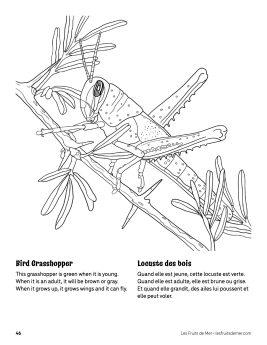 AAM-Bird-Grasshopper