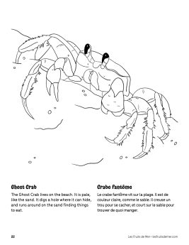 AAM-Ghost-Crab