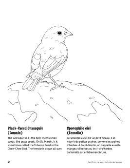 AAM-Grassquit-Female