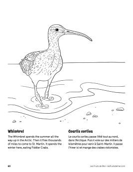 AAM-Whimbrel