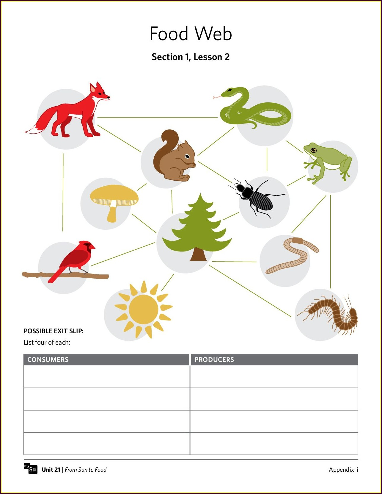 Food Chain Worksheet For Grade 2