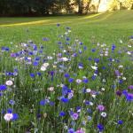 Fleurs du jardin des carres maison d'hôtes les hauts de sauliès