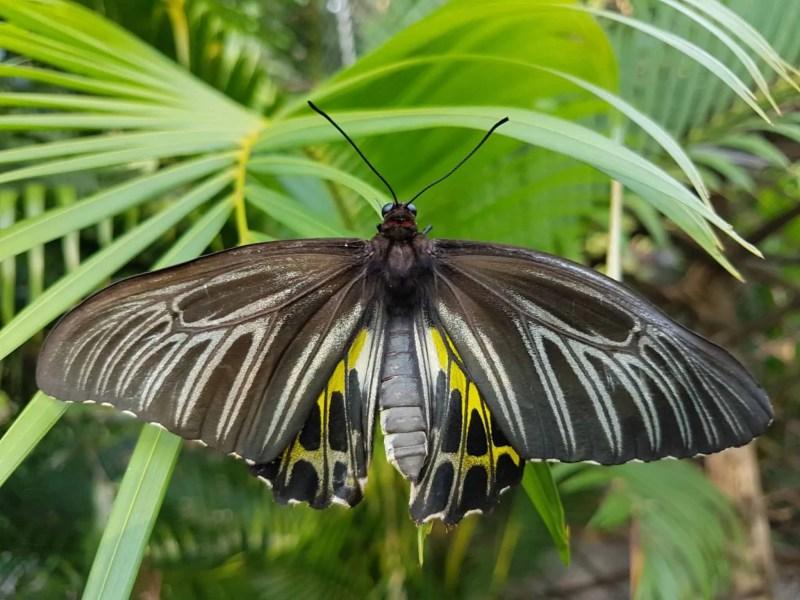 Cambodge, Kep et sa ferme aux papillons 🦋 25