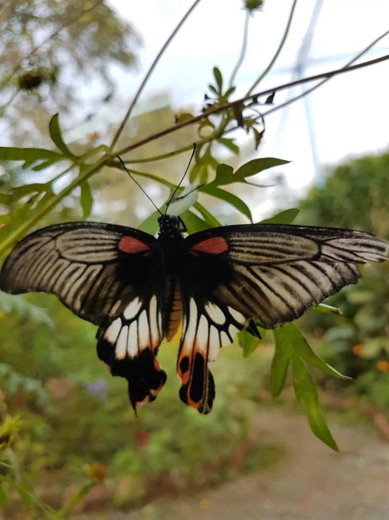 Cambodge, Kep et sa ferme aux papillons 🦋 31