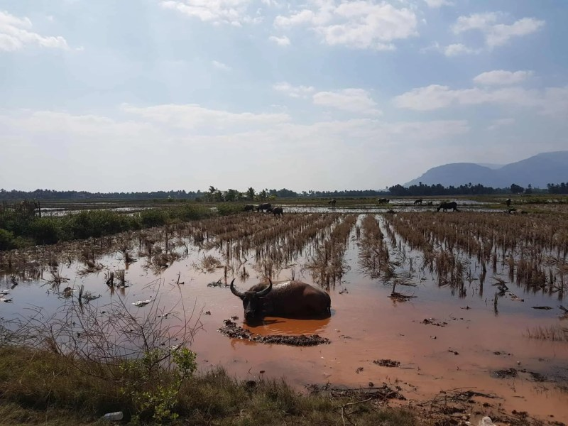 Cambodge, marais salants et hôtel de folie à Kampot 🤩 2