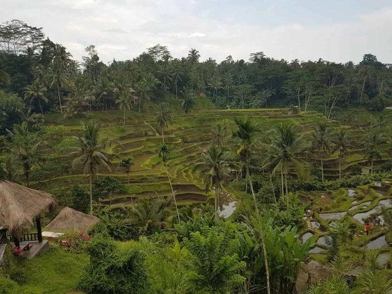 Bali, les rizières de Tegallalang et le temple Pura Tirta Empul🌱 16