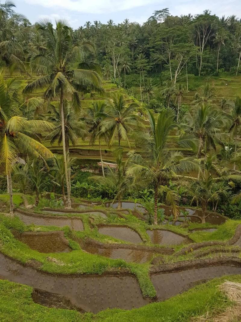 Bali, les rizières de Tegallalang et le temple Pura Tirta Empul🌱 18