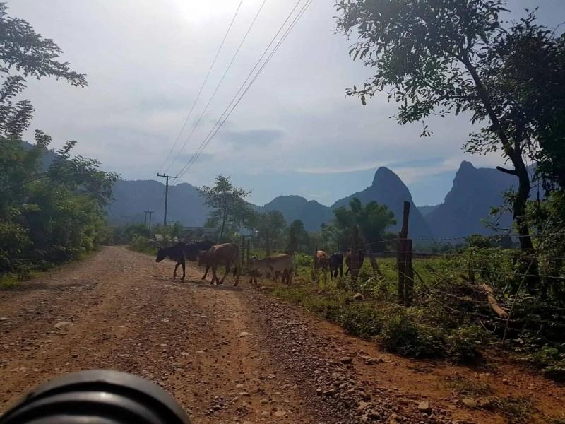 Laos, un tour en buggy qui ne se passe pas comme prévu 🏎 12
