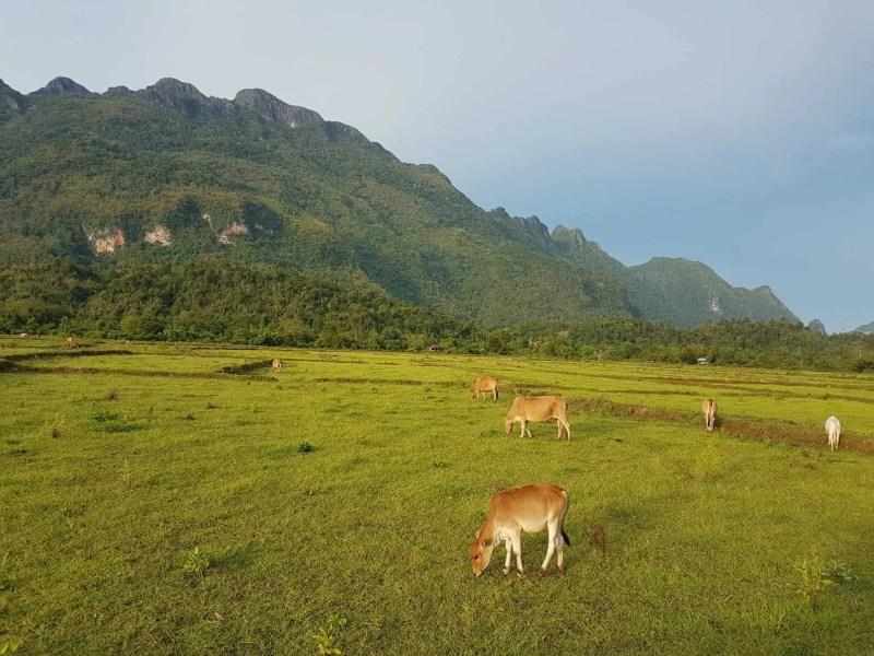 Laos, au cœur de la magnifique campagne de Vang Vieng en moto cross 🏍 17